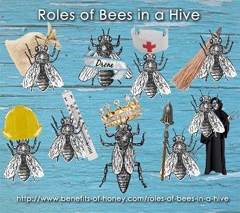 xbeejobs-hive